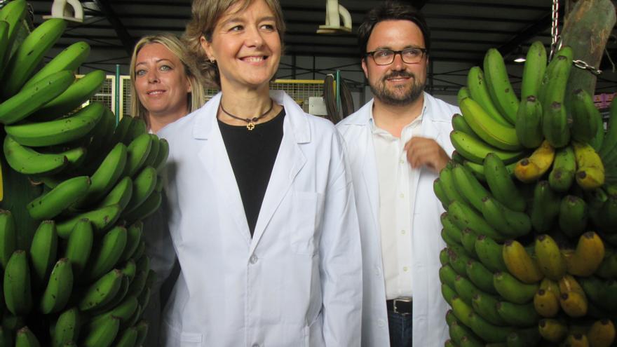 García Tejerina en la visita a una cooperativa de plátanos de Puntallana. Foto: LUZ RODRÍGUEZ