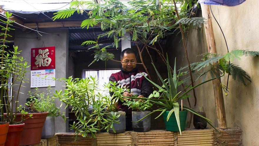 Rogelio Peña manteniendo sus plantas en su casa en la localidad de Usme, Bogotá/ Fotografía: Noelia Vera.