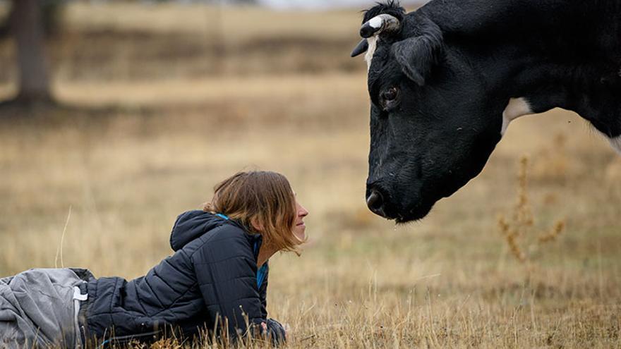 Laura y Carmen, una vaca libre en el santuario madrileño Wings of Heart. Foto: Tras los Muros