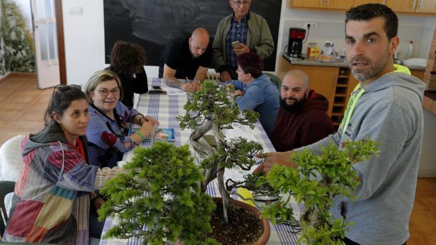 Reivindican Galicia como potencia en bonsais