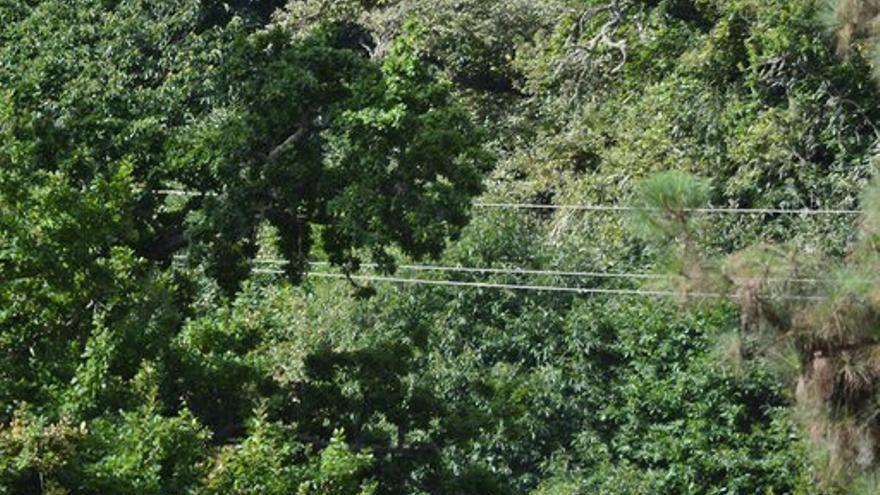 Cables de alta tensión pueden observarse por todos los barrancos cercanos al lugar donde se inició el fuego de Valleseco.