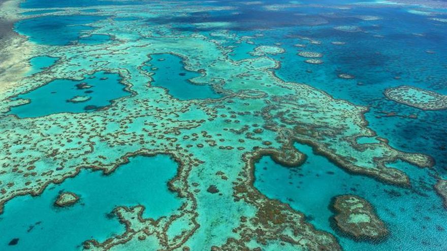 El 67 por ciento de los corales del norte de la Gran Barrera de Australia ha muerto