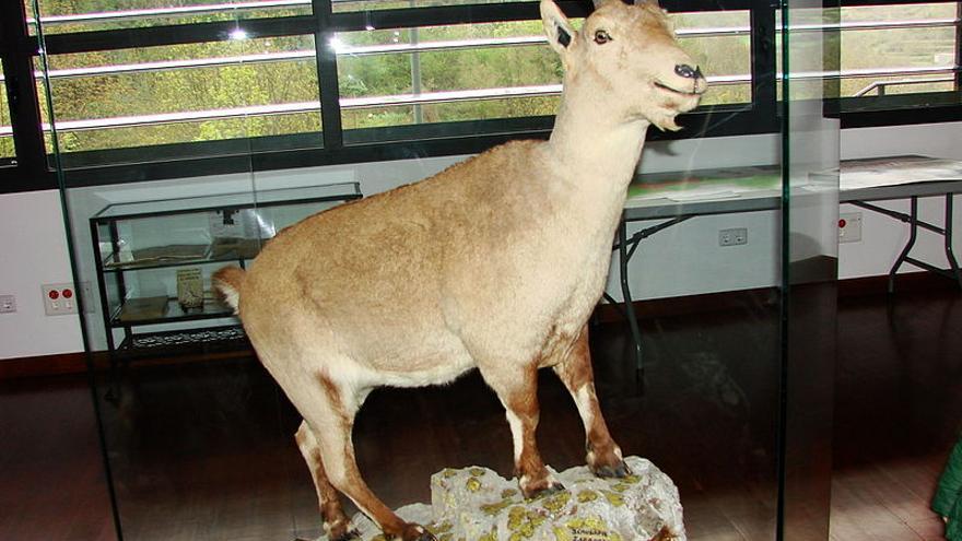 La última bucardo, Celia, en el Centro de Visitantes del Parque nacional de Ordesa