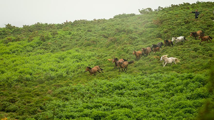Los vecinos de Sabucedo acompañados por los visitantes dirigen a los caballos al 'peón'. Foto: El caballo de Nietzsche