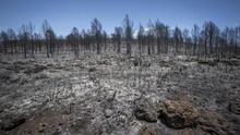 El de Carcaixent ha sido el incendio más devastador de los últimos días