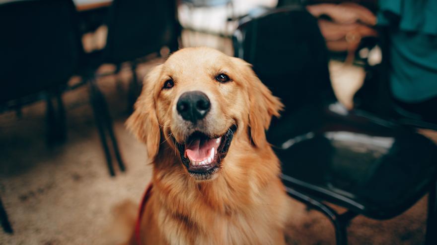 """Es mentira que """"si tu perro hace pis dentro de casa, debes restregar su hocico en la orina"""""""