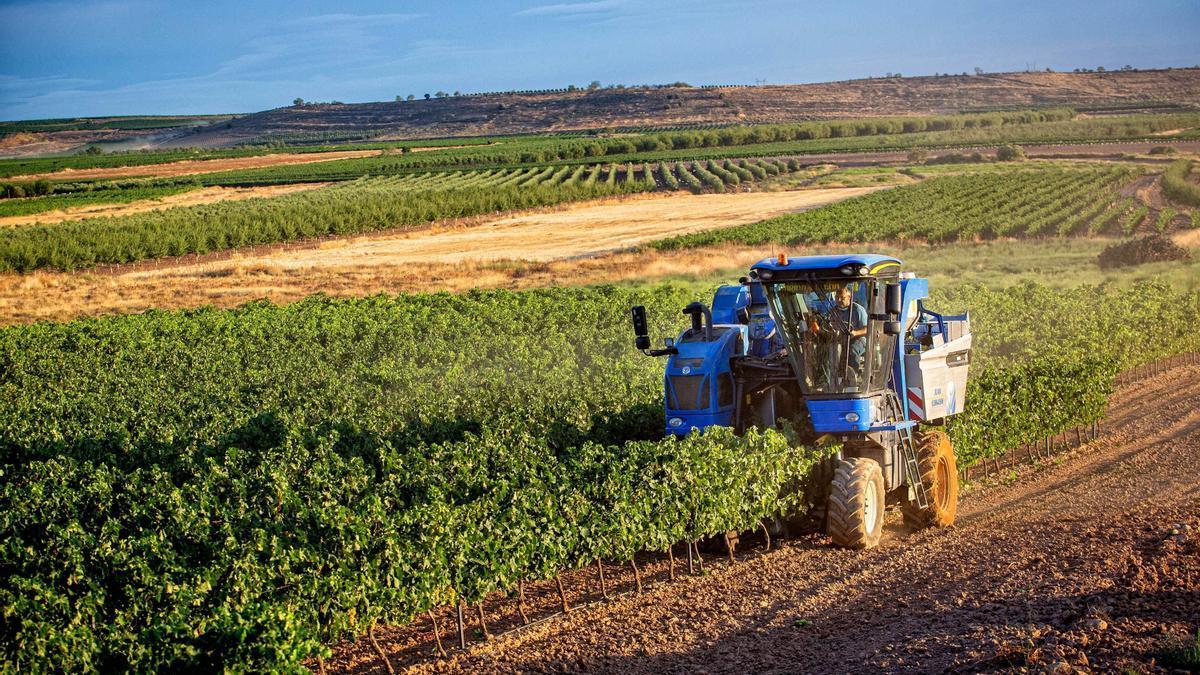 Vendimia mecanizada, en La Rioja