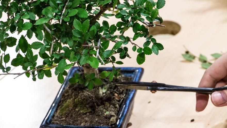 El Salón de Manga incluyó talleres de todo tipo, entre ellos el cuidado y mantenimiento de bonsáis