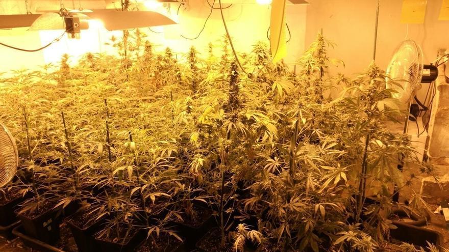 Detenidas tres personas y decomisadas 200 plantas de Marihuana en una operación antidroga en Iturralde (Bilbao)