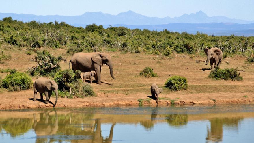 Safari en África