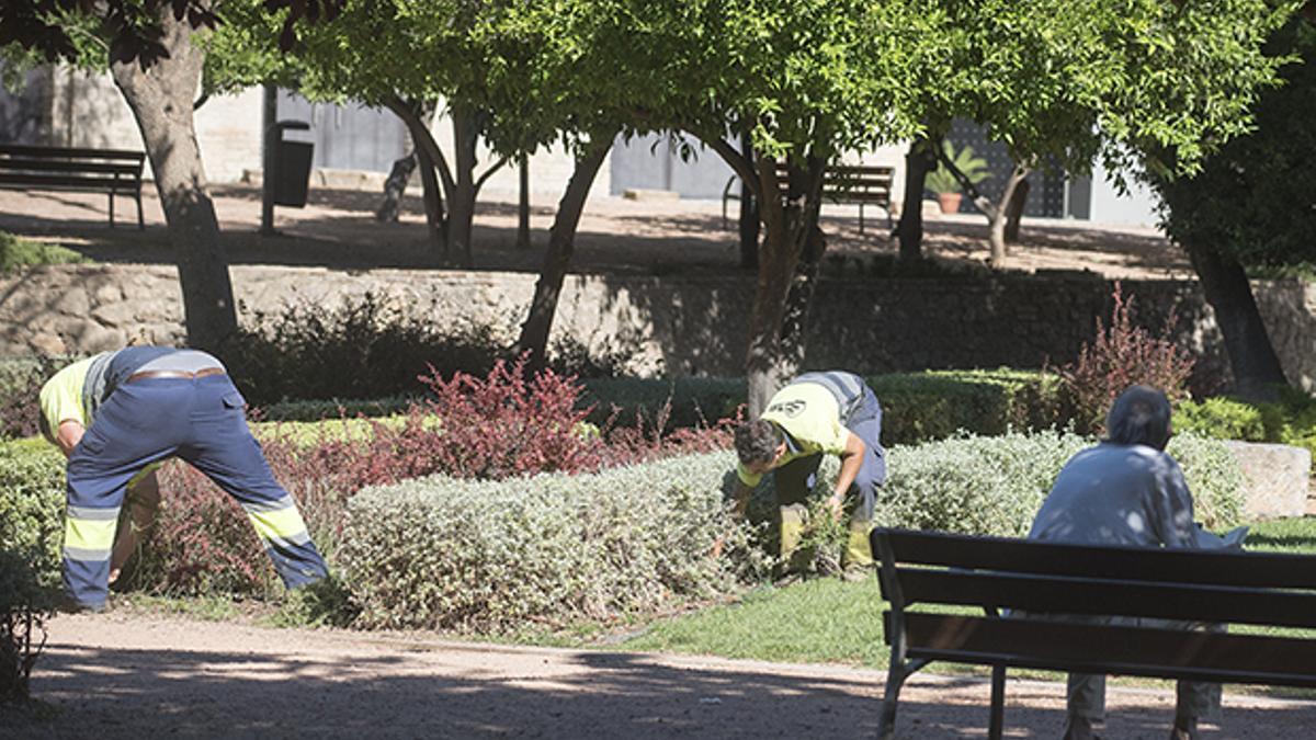 Técnicos de Parques y Jardines trabajando en los Jardines de Orive