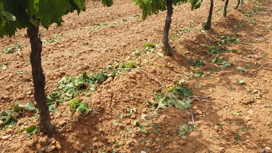 Daños provocados por la tormenta de granizo de este domingo por la tarde. FOTO: UPA Albacete
