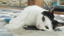 Vuelvo a trabajar fuera de casa: ¿sufrirá mi gato estrés por separación?