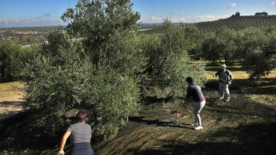 El Parlamento andaluz exige a la UE una respuesta contundente en defensa de la aceituna negra