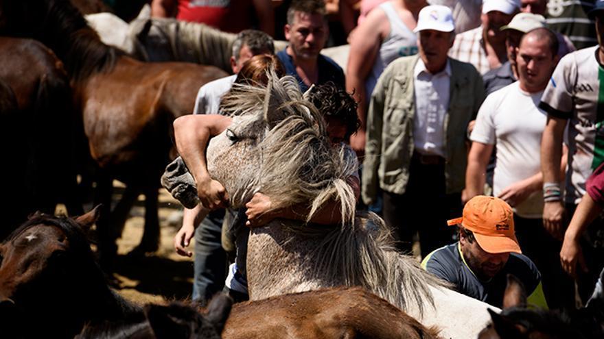 Dos hombres reducen a un caballo contra su voluntad. Foto: El caballo de Nietzsche