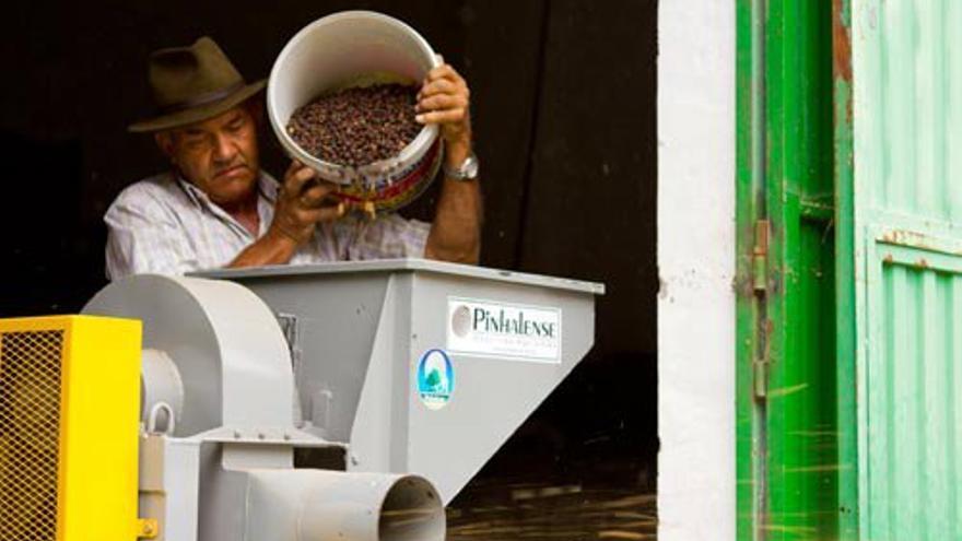 Un operario quita las cáscaras del café en la Bodega Los Berrazales. VIAJAR AHORA