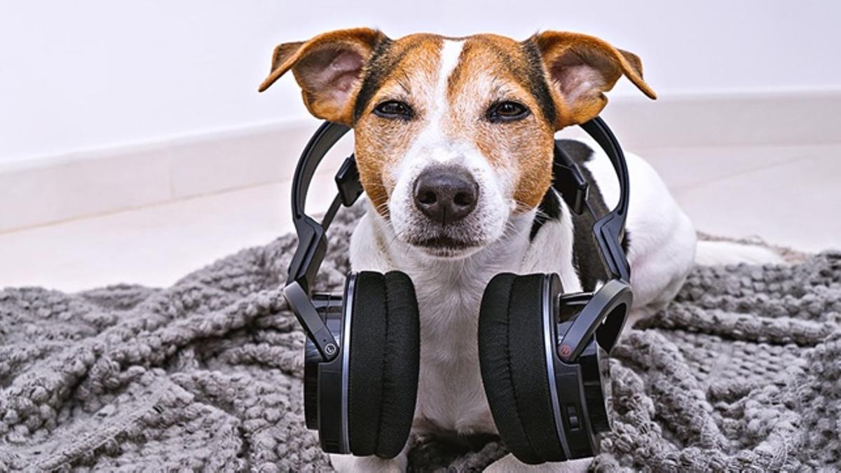 La música puede relajar a los perros si es la adecuada.