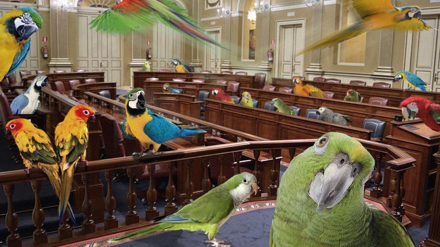 Parlamento Canario abarrotado de loros, cotorras y demás fauna. (Adar Santana).