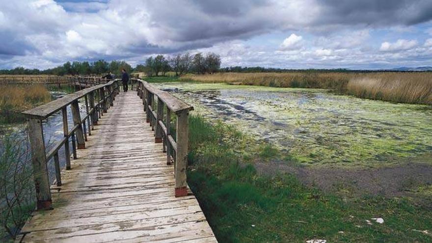 Parque Nacional de las Tablas de Daimiel / Turismo Castilla-La Mancha