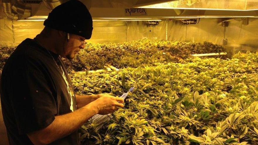 Colorado permite desde hoy la venta de marihuana para uso recreativo