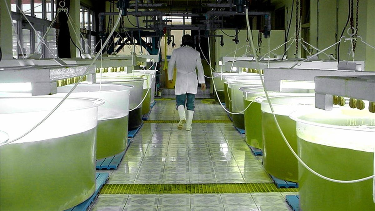 Presentaron el proyecto de ley sobre un nuevo Marco Regulatorio de  Biocombustibles: qué dice - elDiarioAR.com