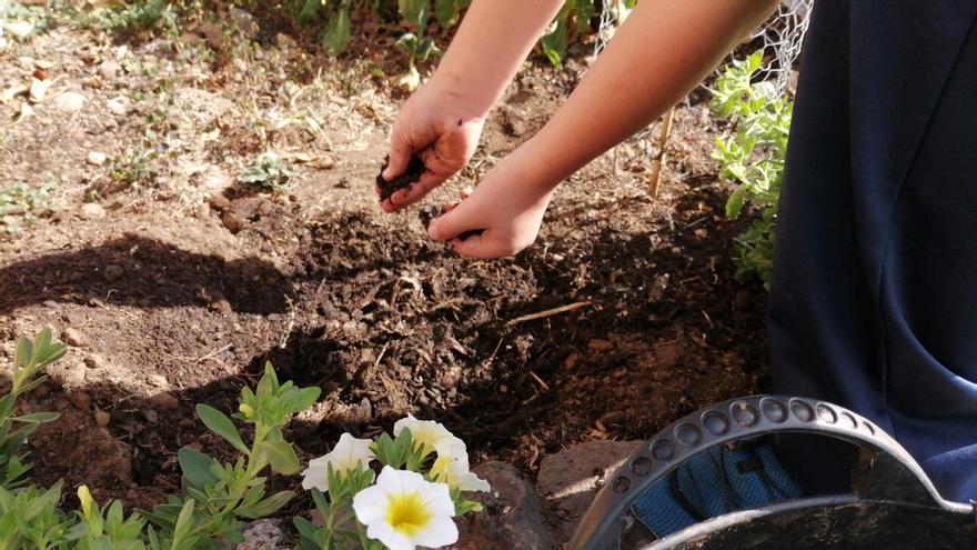 La Palma acoge el primer curso de 'Maestría en compostaje' que se imparte en Canarias
