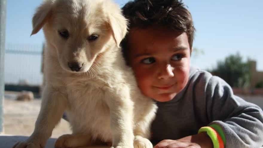 Niño palestino disfrutando de la compañía de un perro cachorro. Foto: Ahmad Safi