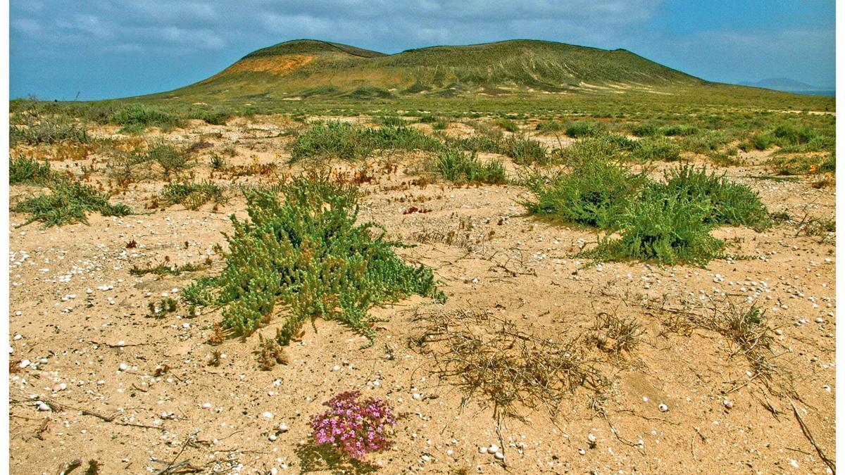 Paisaje afectado por las minas descubiertas en Lanzarote y Fuerteventura