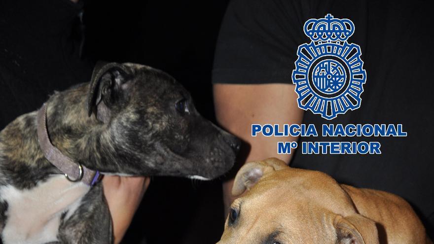 Dos perros, tras ser rescatados por los agentes
