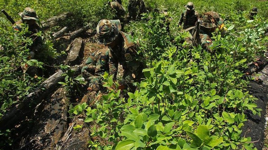 La ONU certifica la destrucción de 10,8 toneladas de cocaína y marihuana en Bolivia