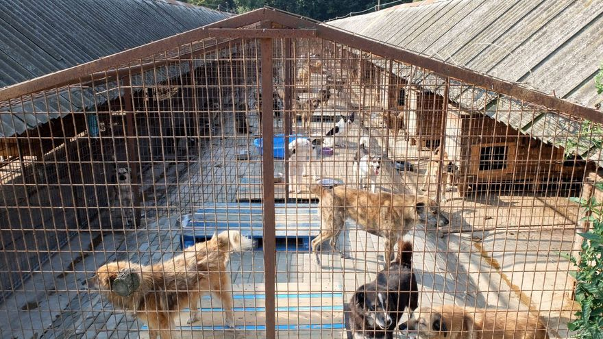 Con 4.000 perros rescatados, el refugio de Smeura es el mayor del mundo.
