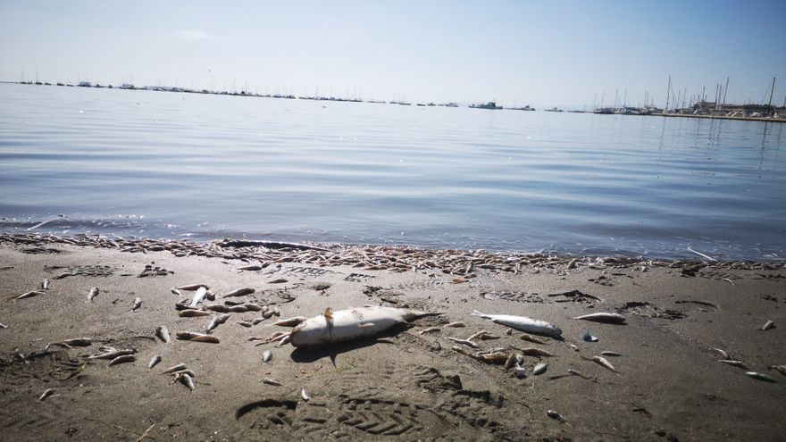 Peces muertos en la orilla del Mar Menor / EA.