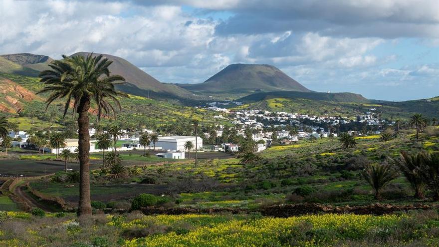 El espectacular manto verde de Lanzarote tras el paso de Filomena