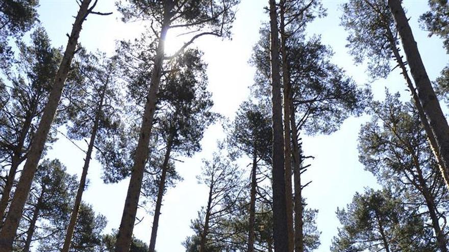 España tiene la segunda mayor masa forestal de Europa, pero no la rentabiliza