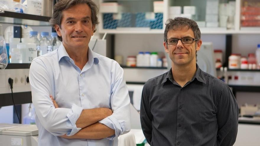 El CIMA identifica que una proteína implicada en la enfermedad de Crohn participa en el desarrollo de un tipo de linfoma
