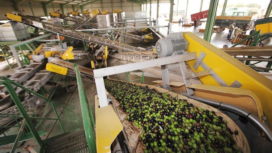 El volumen de las exportaciones andaluzas de aceite de oliva virgen aumenta un 24% durante la campaña 2018-19