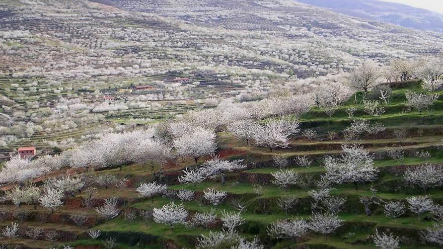 El valle del jerte comienza a celebrar el cerezo en flor for Oficina de turismo valle del jerte