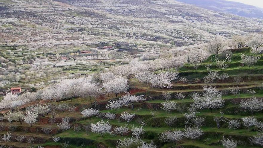 Cerezo en flor, Valle del Jerte / http://www.turismovalledeljerte.com/