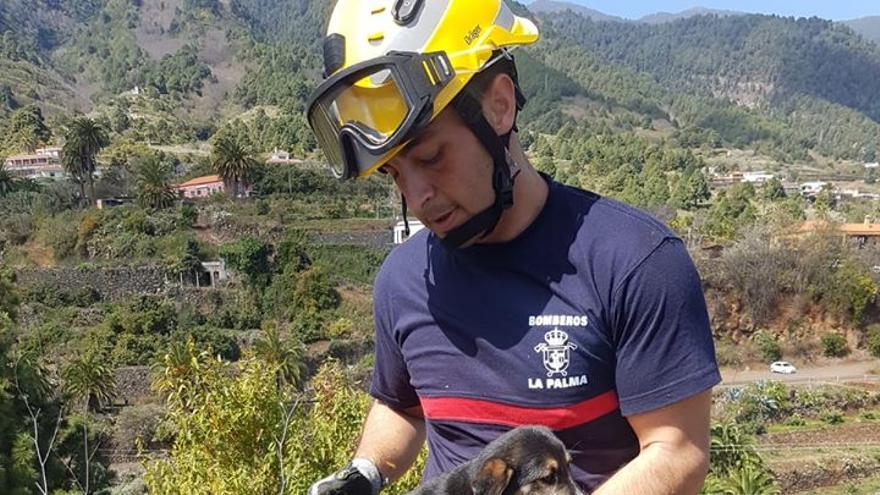 Un bombero de La Palma con el cachorro rescatado.