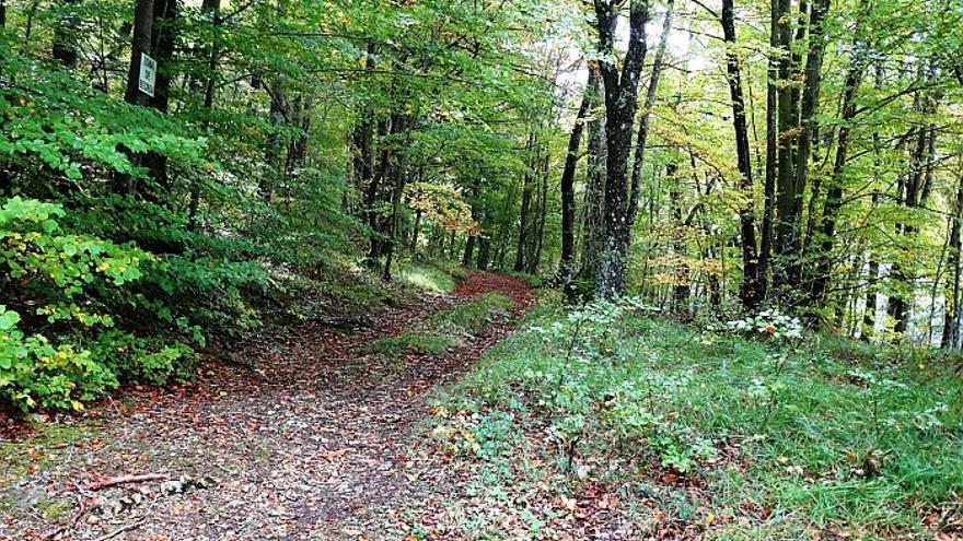 Bosque de hayas en Peñacerrada, Álava