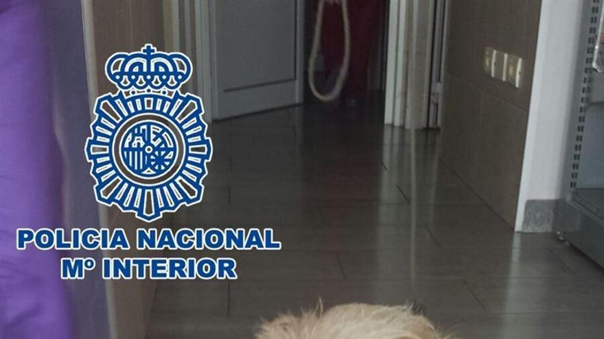 El propio centro veterinario se hizo cargo del perro hasta que se pudiera realizar su ingreso en un albergue municipal.