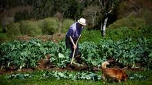Los agricultores jóvenes piden más apoyo económico de la CE ante la pandemia