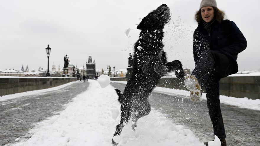 Un perro negro en la nieve.