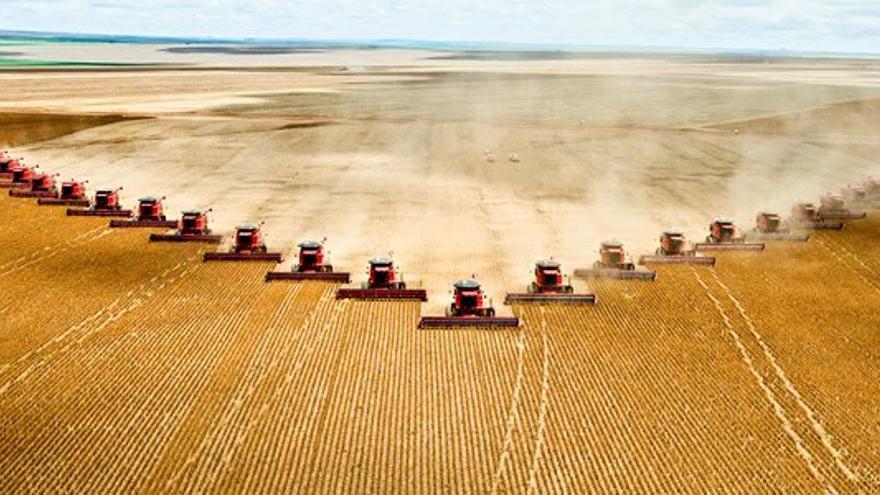 Ejemplo de agricultura industrial basada en el monocultivo.