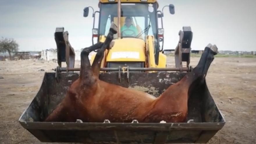 Una imagen de la retirada de un caballo muerto en El Rocío difundida por PACMA en 2015.