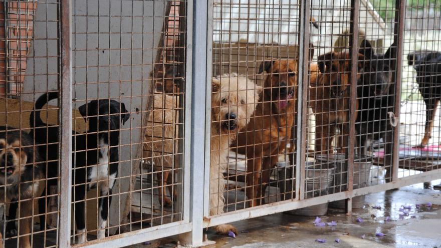 Varios perros abandonados en las instalaciones del Ayuntamiento de Valencia.