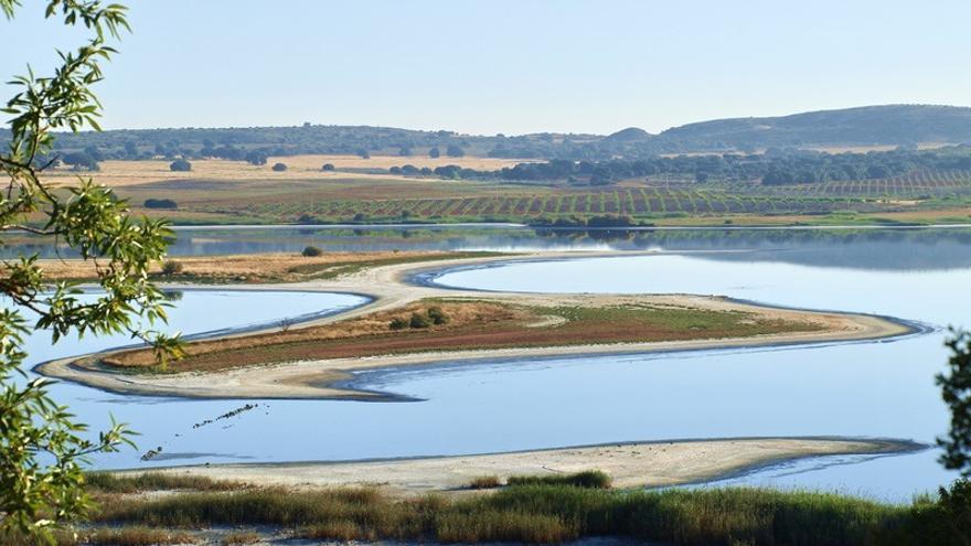 La falta de agua disminuye la colonia de flamencos en la laguna de Pétrola