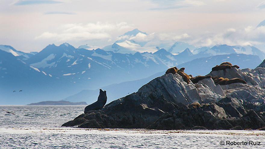 Lobos marinos en el Canal Beagle en Ushuaia, Argentina