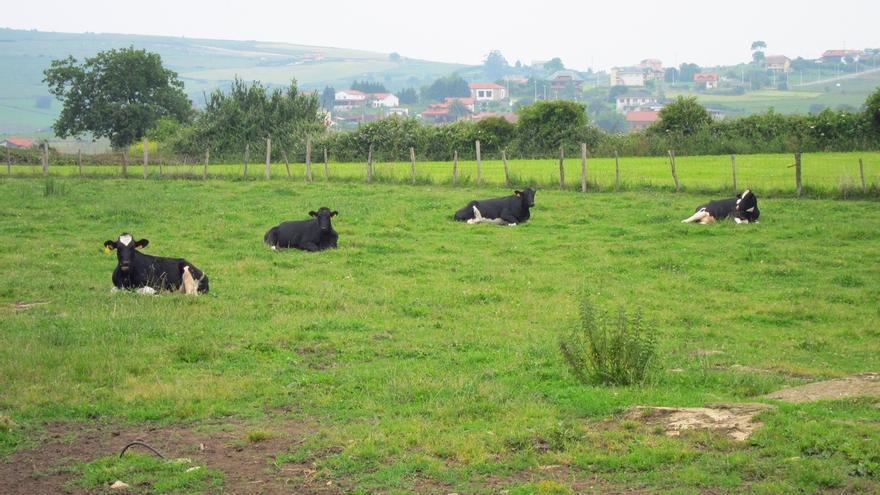 El Gobierno aprueba nuevas medidas para seguir avanzando en la erradicación y control de enfermedades ganaderas