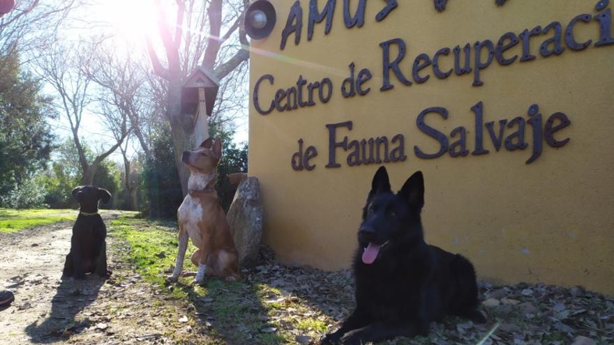 La unidad canina de AMUS, lista para adiestrarse en las labores de búsqueda de aves